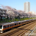 東中野の桜並木とJR中央線