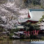 井の頭弁財天と満開の桜